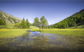 France, Alps, trees, grass, water, nature landscape