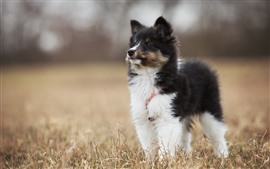 Furry cute puppy, black and white, grass