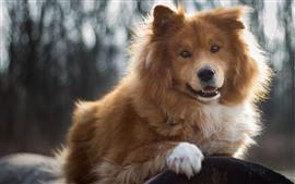 Furry dog, hazy background