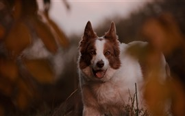 Preview wallpaper Furry dog, hazy