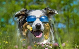 Preview wallpaper Furry dog, sunglass, wildflowers, funny animal