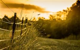草、フェンス、朝、日差し