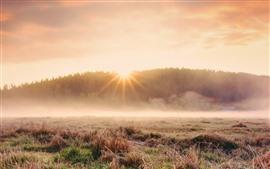 Трава, туман, утро