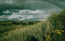 Grass, trees, city, clouds, rainbow