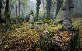 미리보기 배경 화면 그레이브스, 묘지, 이끼, 십자가