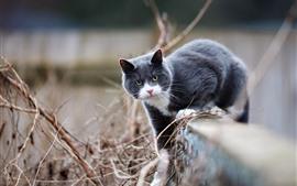 壁紙のプレビュー グレーの猫、フェンス、ポーズ