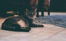 Gato cinzento olhar para trás, andar