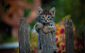 壁紙のプレビュー グレーの子猫、フェンス