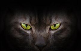 Olhos verdes, gato, vista dianteira, rosto