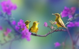 Preview wallpaper Green feather birds, purple flowers, tree branch