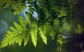 Folhas de samambaia verde, galhos