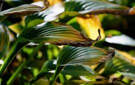 Folhas verdes, plantas de casa