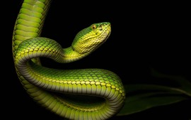 Preview wallpaper Green snake, bend, black background