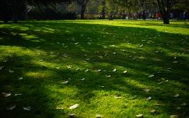 Chão, grama, folhas