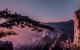Preview wallpaper Huangshan, cliff pine tree