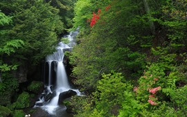 Japan, Honshu, Nikko National Park, waterfall, creek