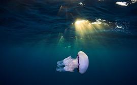 Água-viva, subaquática, mar, luz solar