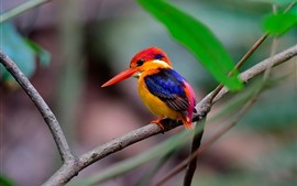 Preview wallpaper Kingfisher, colorful feathers