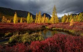 Kolyma, árboles, hierba, nubes, otoño, atardecer.