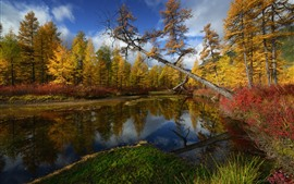 Preview wallpaper Kolyma, trees, river, autumn