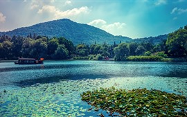 Preview wallpaper Lake, boat, water lily, trees, park, China