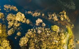 Lago, árvores, outono, vista de cima