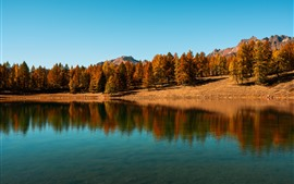 壁紙のプレビュー 湖、木々、青空、水反射、秋