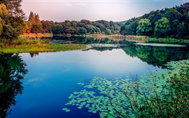 Preview wallpaper Lake, water lily, trees, nature landscape