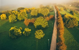 Preview wallpaper Lithuania, Kaunas, road, trees, fog, top view