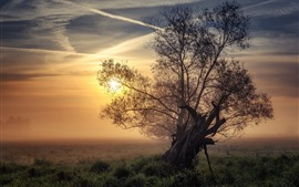 Preview wallpaper Lonely tree, grass, sunrise, fog, morning
