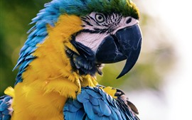 Preview wallpaper Macaw, parrot, blue feather