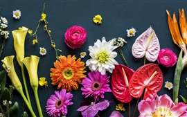 Preview wallpaper Many kinds of flowers, gray background