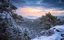 Topo da montanha, floresta, árvores, neve, inverno