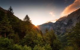 Aperçu fond d'écran Montagnes, alpes, arbres, matin, lever soleil