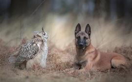 Coruja e cachorro cara a cara