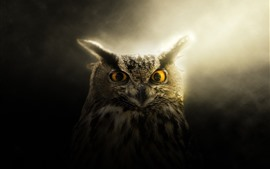 Preview wallpaper Owl, eyes, ears, backlight
