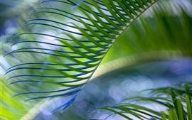 Пальмовые листья, туманные