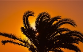 Palm tree, leaves, silhouette, sunset