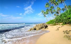 Palmeras, playa, mar, olas, rocas.