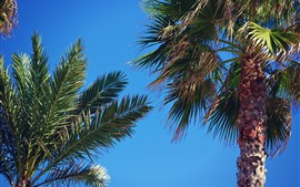 Preview wallpaper Palm trees, blue sky