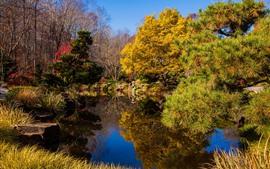 Parque, estanque, arboles, otoño