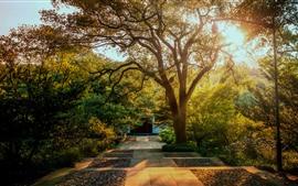 Park, árvores, outono dourado, luz solar