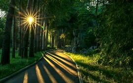 Parque, árvores, caminho, raios de sol, sombra