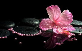 Preview wallpaper Pink hibiscus, petals, water droplets, stones, SPA