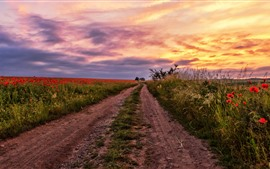 Poppies field, sunset, clouds, path