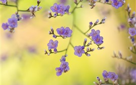 Preview wallpaper Purple flowers, twigs, spring, hazy