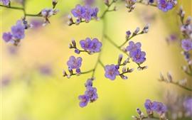 Purple flowers, twigs, spring, hazy
