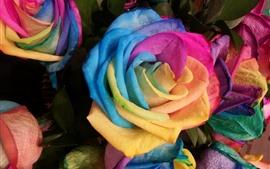 Радужные цветные розы, лепестки, красочные