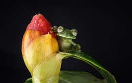 Preview wallpaper Red flower and green frog, black background