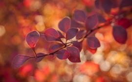 Красные листья, ветки, туманные, осень